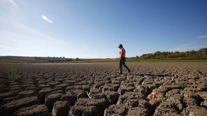 La laguna del Rincón en Aguilar, santuario del pato malvasía, se queda sin agua