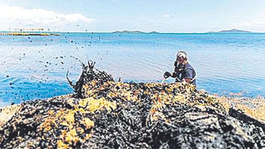 Acelerón para retirar biomasa en Los Urrutias y Estrella de Mar