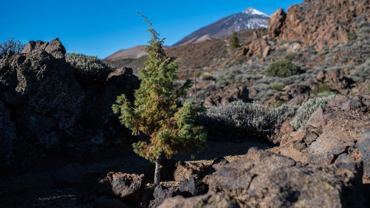 Parte del paisaje de Las Cañadas con el Teide al fondo.