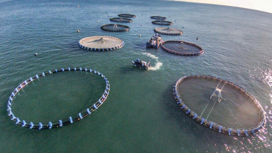 La acuicultura española, zarandeada por la Covid