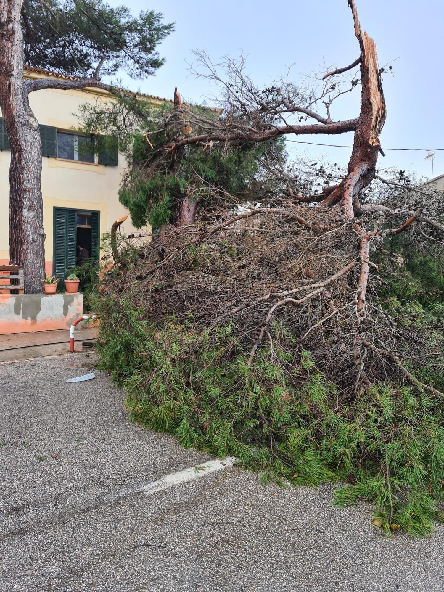 Los estragos de 'Hortense' en Mallorca