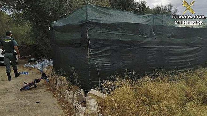 La Guardia Civil desmantela una plantación de marihuana en Felanitx