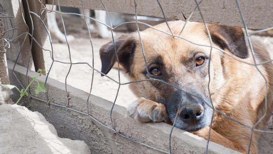 Bajan las adopciones de perros por la crisis