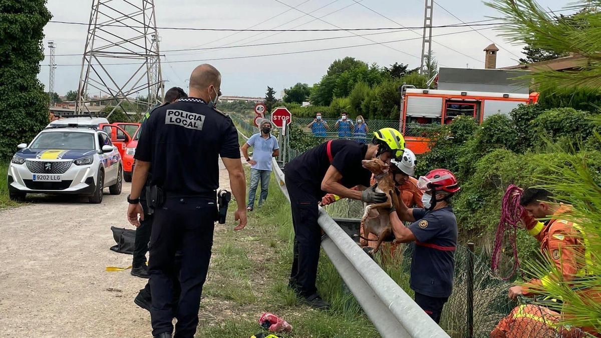 Rescate de un perro en una acequia de Picassent.