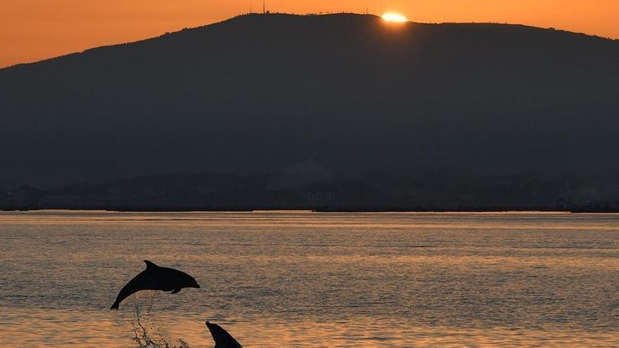 El estudio de los delfines en las Rías Baixas