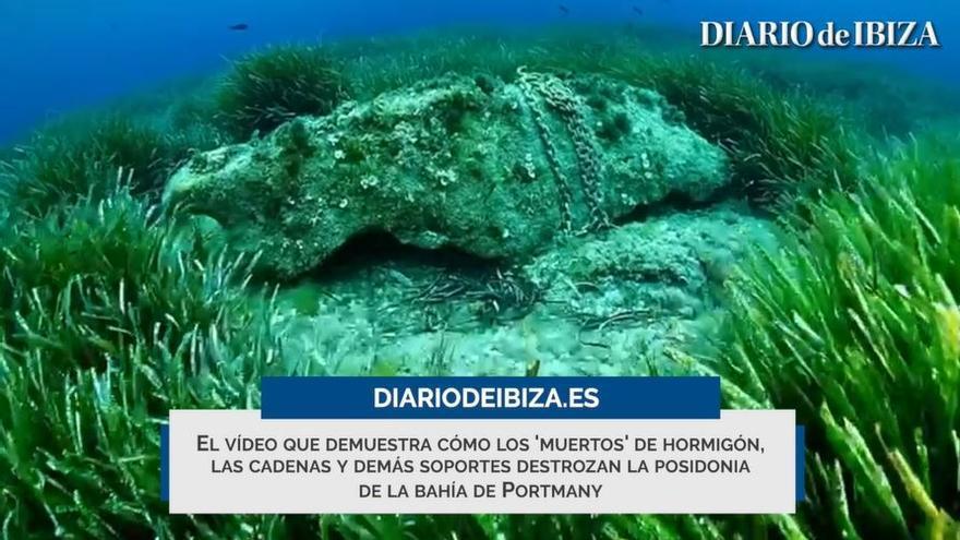 Así destrozan los muertos la posidonia de Ibiza