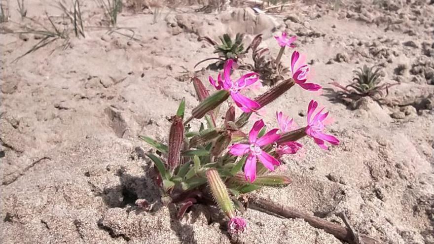 Creen refugis de biodiversitat en cinc platges de la província
