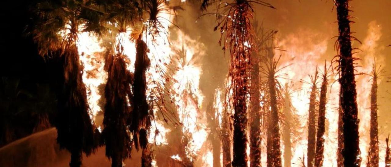 Palmeras ardiendo por la noche.