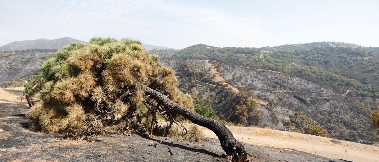 El incendio de Málaga, en imágenes