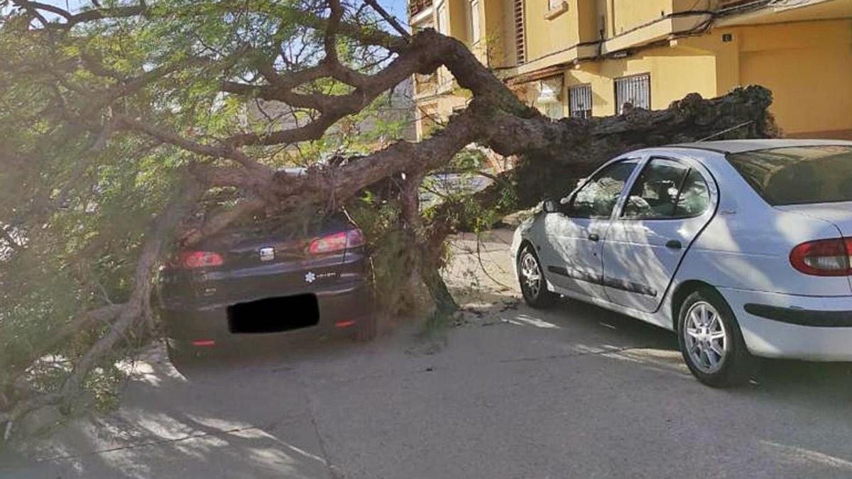 Un árbol desplomado sobre dos vehículos en una calle de Carlet. | LEVANTE-EMV