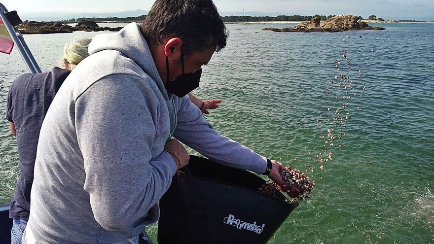 Los mariscadores a flote de Cambados resiembran 1,5 millones de unidades de cría de almeja