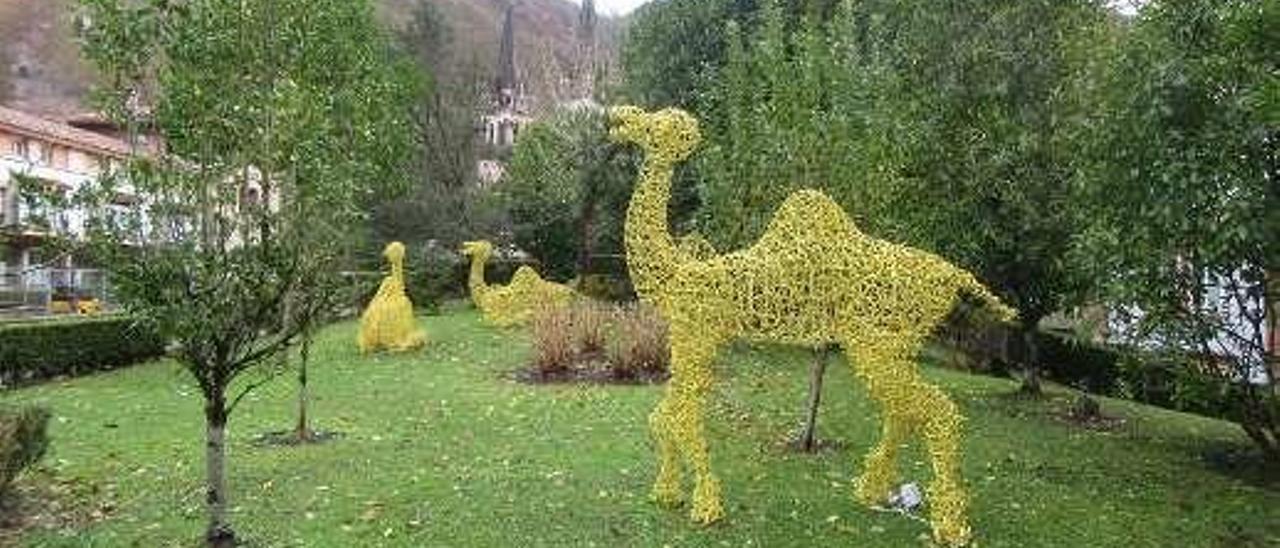 Camellos en un jardín.