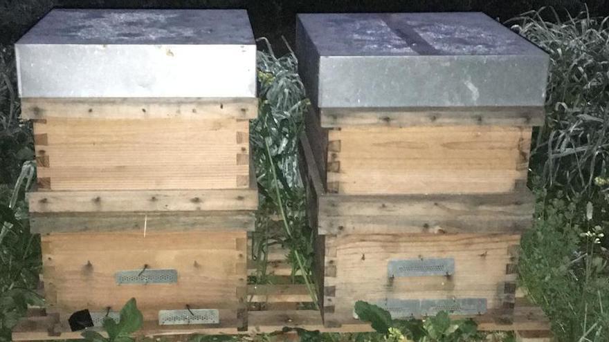 Bienenstöcke im Wert von 15.000 Euro auf Mallorca gestohlen
