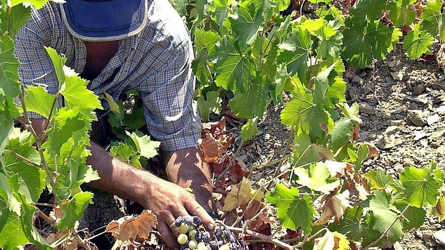 El 92% de jóvenes encuestados en Guadalteba y Serranía cree que no se valora el trabajo agrícola