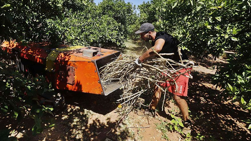Alzira marca el camino para aprovechar los restos de  poda agrícola tras triturarlos
