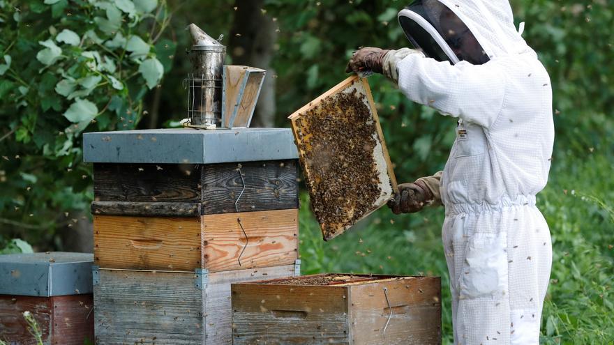 Los apicultores de Alicante denuncian el abandono de la Generalitat a un sector contra las cuerdas