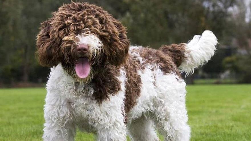 Mata de una patada a un perro que ladró al suyo