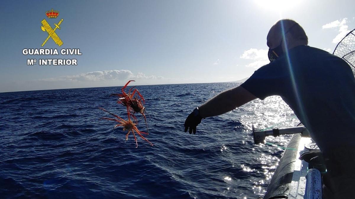 Intervenidas tres nasas ilegales de pesca con Cangrejo Rey en Canarias
