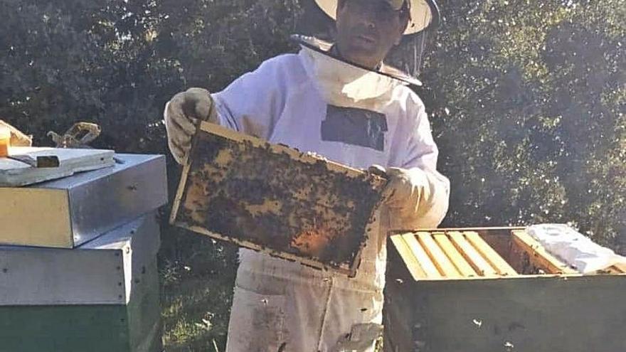 La miel de Gallegos del Campo, elegida en un certamen entre las 30 mejores del mundo