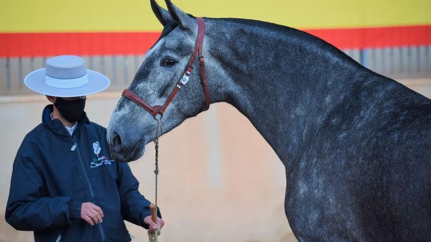 Roberto Bautista está presente con una de sus yeguas en el concurso de los caballos más bellos de España, en Segorbe
