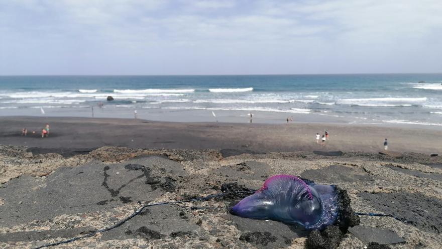 Aparecen medusas en la playa de Almáciga