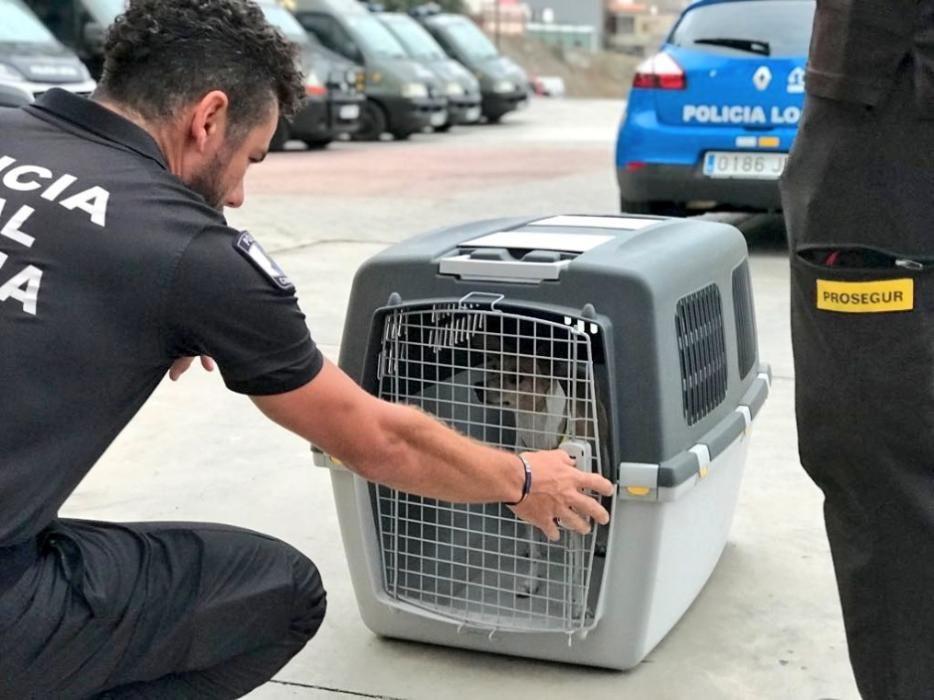 Rescatan a un perro en la potabilizadora