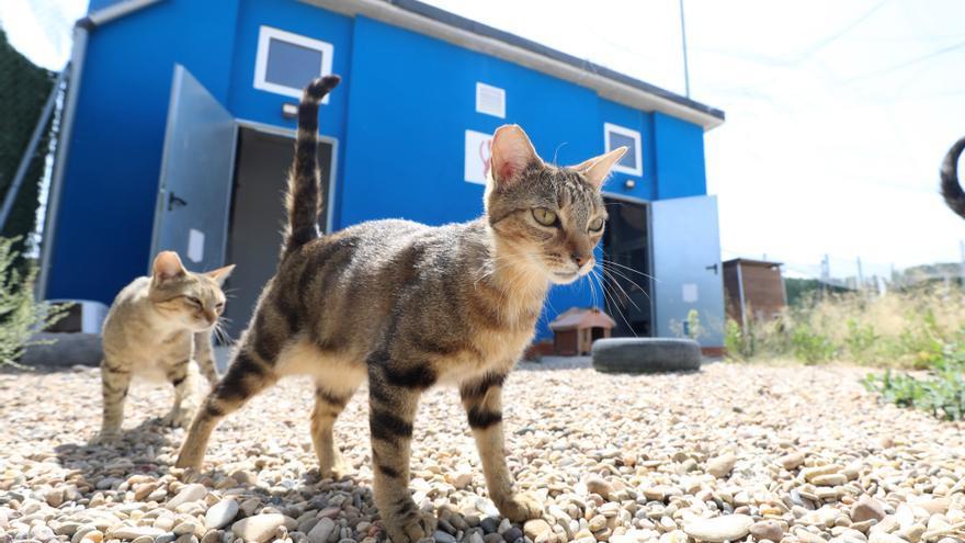 El Centro de Protección Animal de Zaragoza perderá a la mitad de su plantilla en diciembre