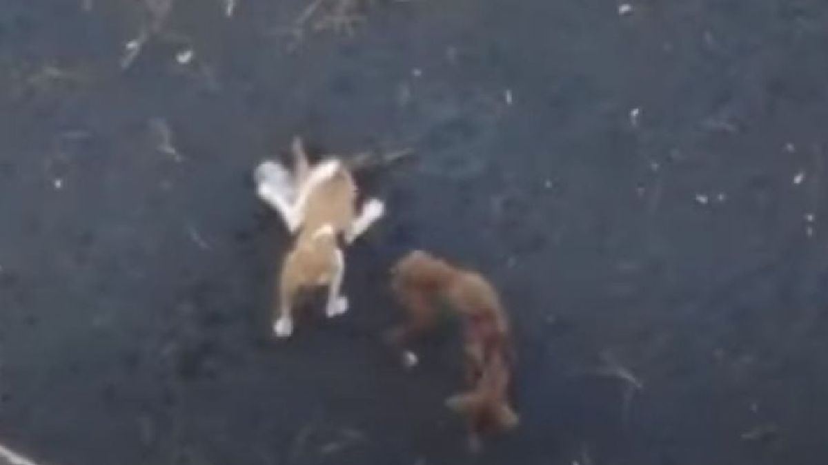 Two of the dogs caught in the pond