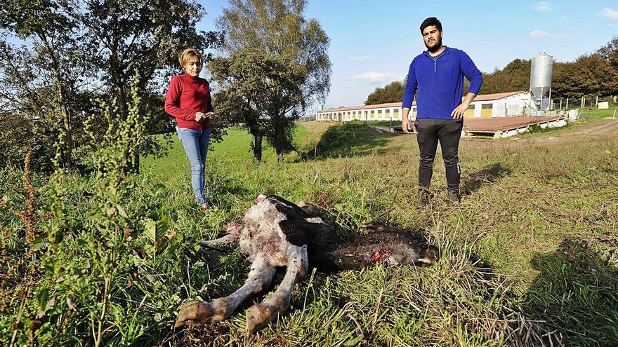 La Xunta eleva las partidas para daños de fauna salvaje hasta 2,6 millones de euros