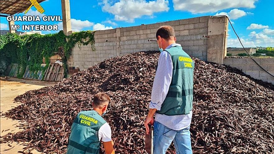 Cuarenta investigados por el robo de 20.000 kg de algarroba