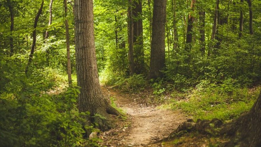 La medicina avala los 'baños de bosque' para reducir la ansiedad provocada por la pandemia