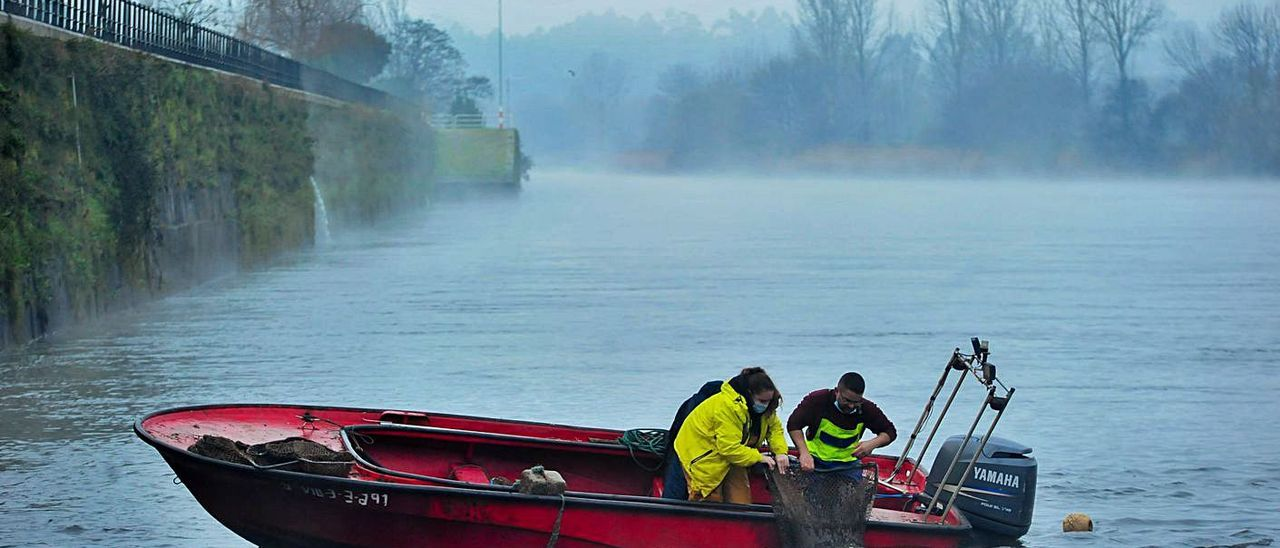 Ramón Agrasar y su esposa recogen una nasa-butrón, en una mañana de intenso frío y niebla. |   // I.ABELLA