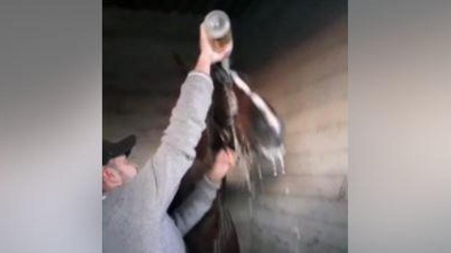Trabreiter auf Mallorca füllt sein Pferd mit Schaumwein ab