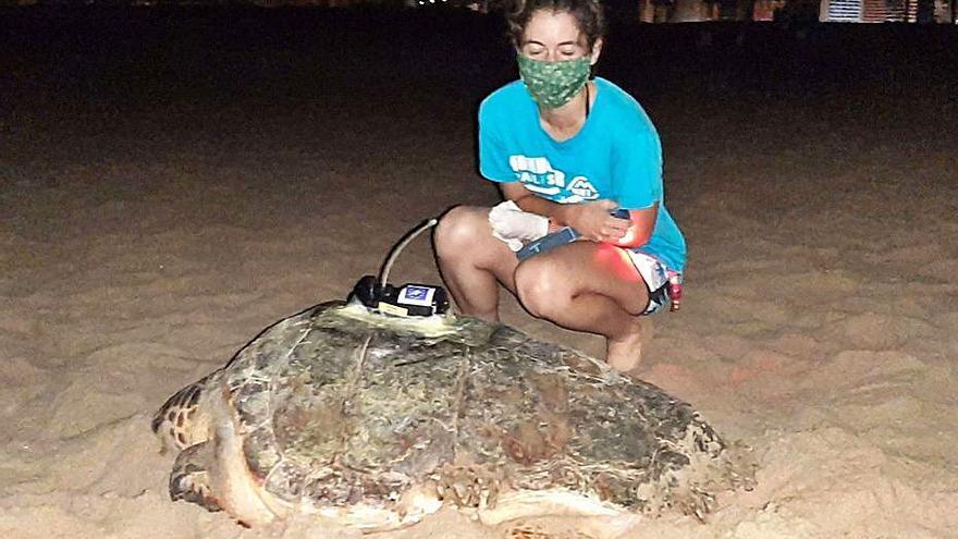 Las tortugas que monitorea el Campus no paran quietas