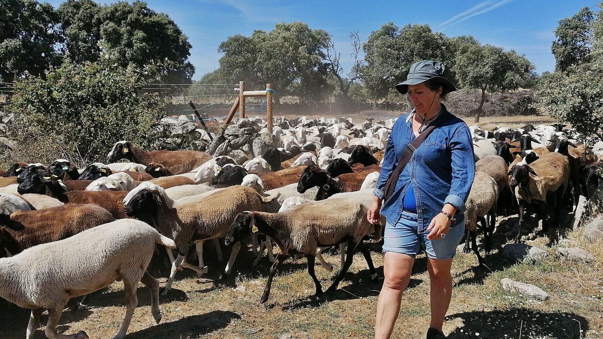 Almudena Rodríguez pastorea con sus ovejas de raza autóctona por los comunales de Argañín.      I. G.