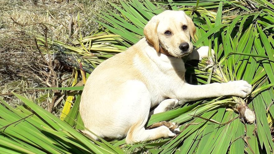 Muerte a palos de un perro en Tomiño: sus dueños piden ayuda ciudadana en la investigación