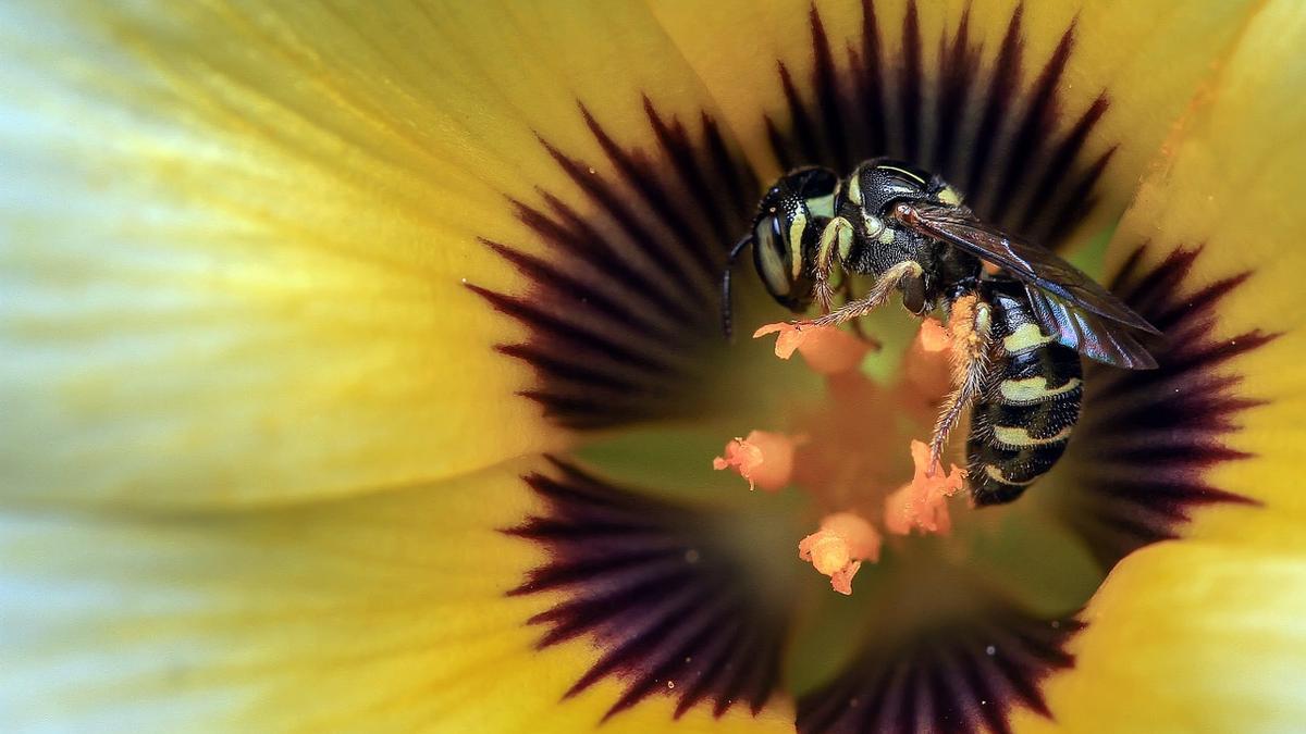 Avispas y abejas, ¿Cómo prevenir y tratar las picaduras?