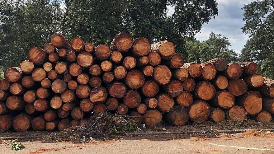 Els veïns de Santa Coloma Residencial, indignats per la tala d'arbres a la urbanització