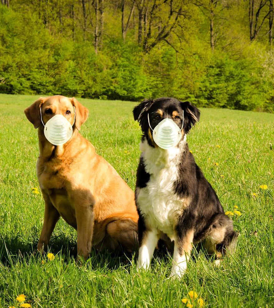 Cuarentena sin mascotas: ¿Qué pasa con tu perro si te contagias de covid?