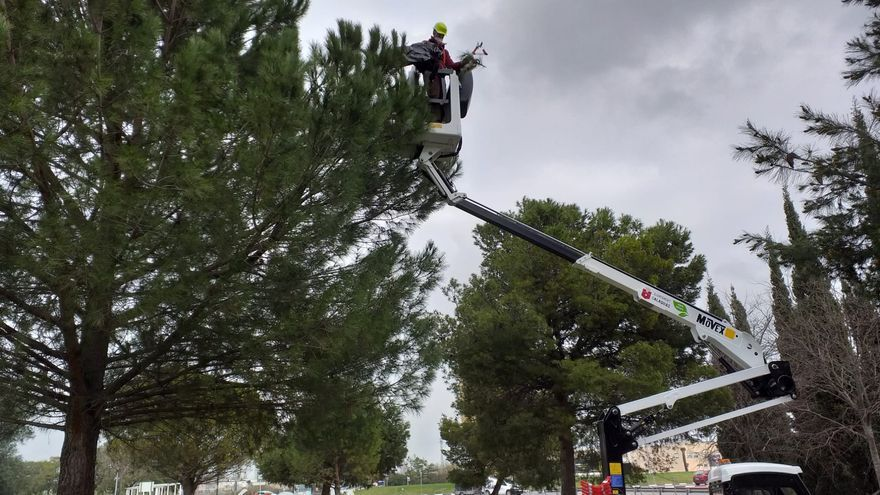 Alaquàs elimina los nidos de procesionaria de los pinos