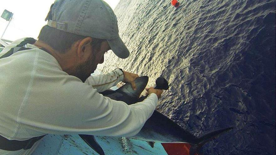 """El cambio global """"asfixia"""" al tiburón azul"""