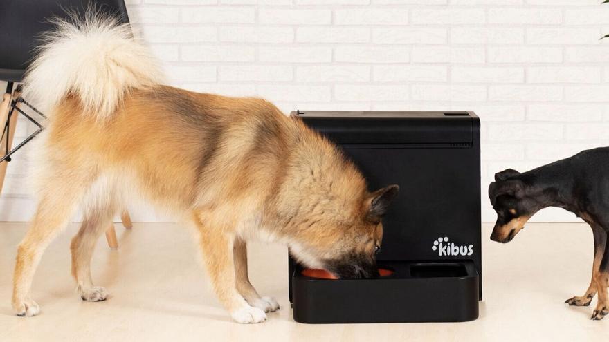 Crean el primer electrodoméstico que prepara comida saludable para perros