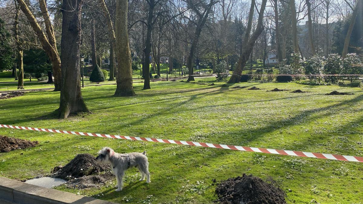 Un perro en el espacio que ocupará el nuevo parque canino