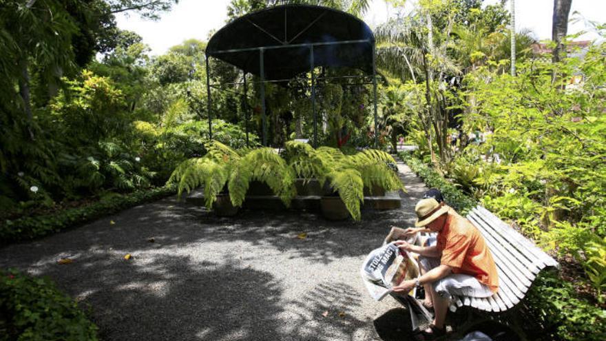 El Gobierno premiará a la mejor fotografía del Jardín Botánico de Puerto de la Cruz