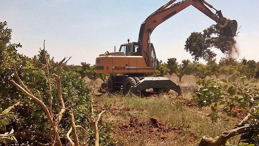 Los agricultores abandonan 1.335 hectáreas de cultivos