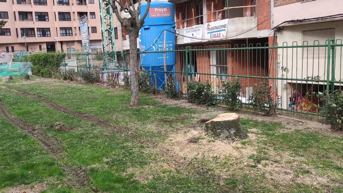 Tala de árboles en Eduardo Barrón.