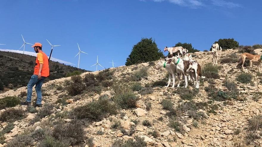 Los cazadores del interior de Castellón urgen más medidas al Consell contra la sarna en las cabras