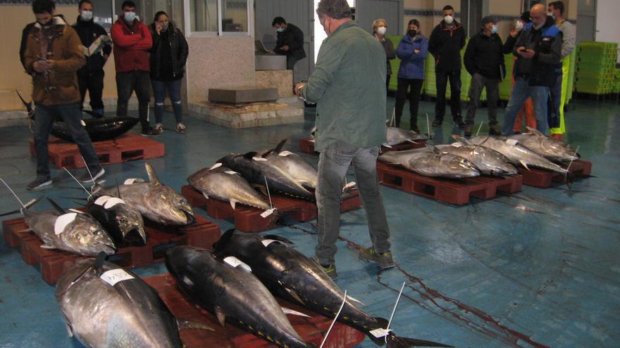 La Comunitat y Cataluña se alían con los pescadores para subir la cuota de atún rojo