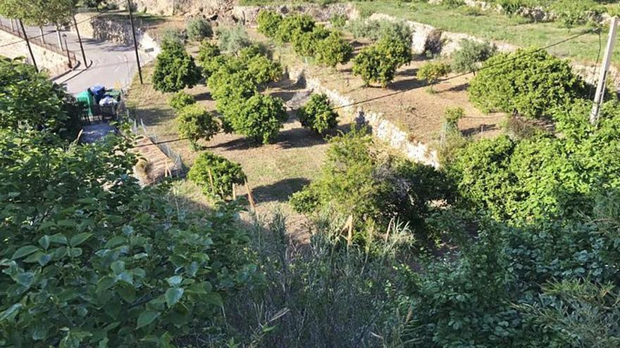 Entidades ecologistas: «El planteamiento urbanístico de Estellencs es una barbaridad»