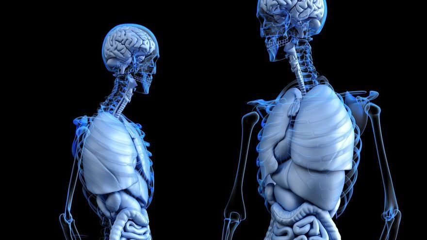 Los órganos del cuerpo y para qué nos sirven
